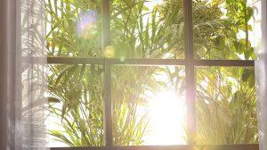 Beautiful view through window on garden in morning